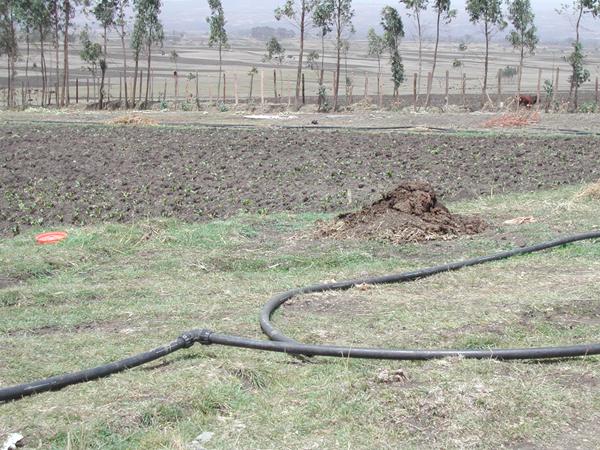 Agricoltura ed Allevamento